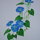 Blue Bindweed by taiche