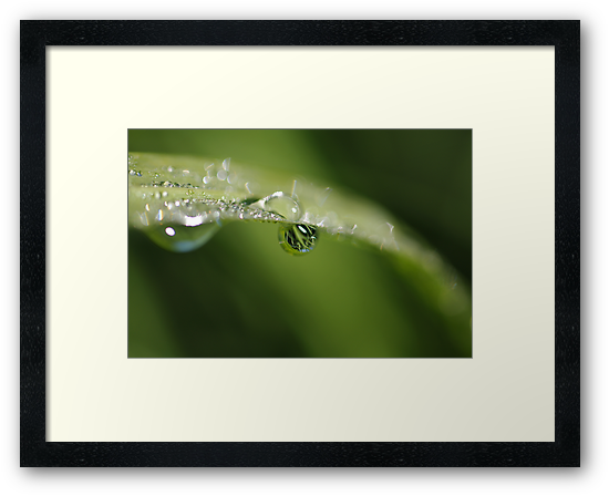 reflections in a raindrop by Clare Colins
