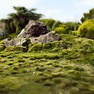 Minature Garden by Steven Vogel