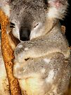 Sleepy Koala #2 by Kayleigh Walmsley