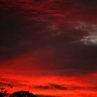 Backyard Sunset by Sea-Change