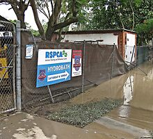 Brisbane Floods 2011 - Inundation - RSPCA by Neil Ross