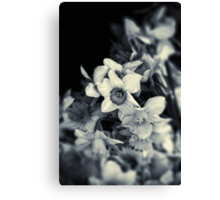 Narcissi II Canvas Print