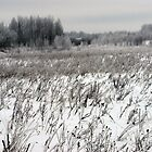 Grassland in winter time 2 by Antanas
