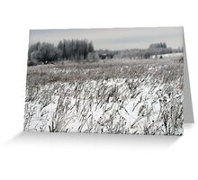 Grassland in winter time 2 Greeting Card