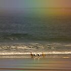 Rainbow with Eider by Nigel Tinlin