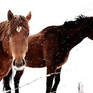 Taking Winter in Stride by EchoNorth