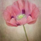 Pastel poppy by Mandy Disher