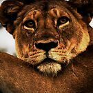 Face of a Lioness by Jake Freeedman