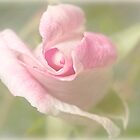 first rose of spring by Celeste Mookherjee