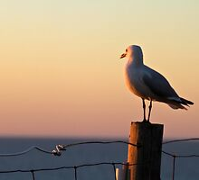 Seagull at Dusk by pennyswork