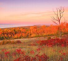Sunrise On Wildflower Hill by GaryColvard