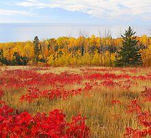 Wildflower Hill In Autumn by GaryColvard