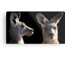 Kangaroo Profile Metal Print
