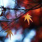 A lone leaf by Gunnella