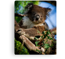 """Cute But Not So Cuddly"" Canvas Print"