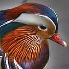 Drake Mandarin...Close Up by Jamie  Green