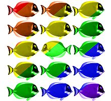 Gay fishes Photographic Print
