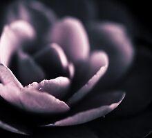 Petals by Silvia Ganora