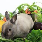 Rabbit with Vegetables by KERES Jasminka