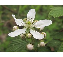 Dew berry blossoms! Photographic Print