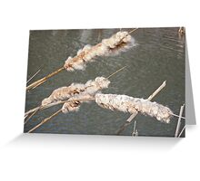 Cattails by the Pond Greeting Card
