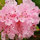 Spring In Bloom by Terrie Taylor