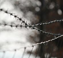 barb wire & stock fence by yampy