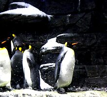 penguins by Megan  Daugherty