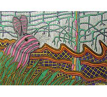 333 - STRIPY BUNNY - DAVE EDWARDS - COLOURED PENCILS - 2011 Photographic Print