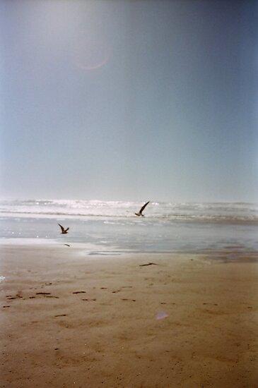 Cannon Beach Seagulls by Allie Ludvigson