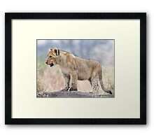 Looking For Some Fun Framed Print