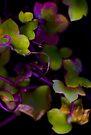 Beautiful colors by Jocelyn  Parry-Jones