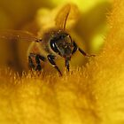 Pollinated Bee! by KiriLees