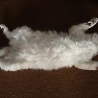 Cat Tip #8 – to look innocent - show your tummy! by ambermay