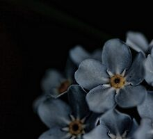 Forget me not! by Sue Tyler