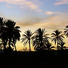 Palm trees at sunset by MiDulceLocura