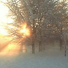 Sun Flare Through Snowy Trees - Cardiff Roath Park by Thomas Martin