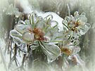 Arborvitae Tips in Ice by MotherNature
