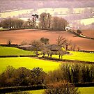East Devon Rural ...4 by Mike  Waldron