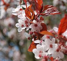 Blossom #2 by Claire Elford