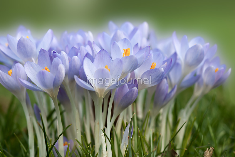 Spring by imagejournal
