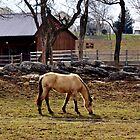 A horse of course! by Chuck Chisler