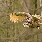 In Flight by Angus Russell