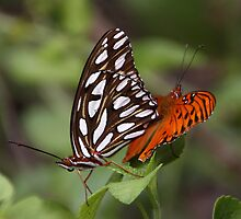Butterfly Love 2 by Gail Falcon