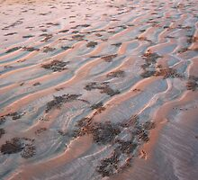 sand crabs on cable beach by nicole makarenco