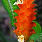 Orange Ginger Flower by Margaret Stevens