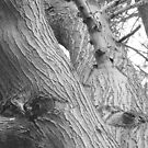 Tree Detail by Joan Wild