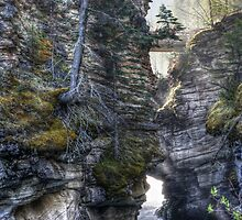 Below Athabasca Falls by Chris Allen