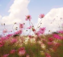 Spring Dreams by Kym Howard